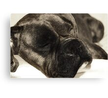Dark brindle boxer in dreamland Canvas Print
