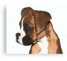 Fawn boxer puppy Canvas Print
