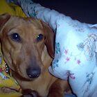 Cozy Puppy by sheena2015