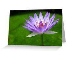 Blue Water Lily - Sydney Royal Botanic Gardens, NSW Greeting Card