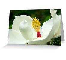 Magnolia Grandiflora - Sydney Royal Botanic Gardens, NSW Greeting Card