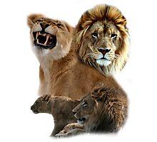 Lion Collage Photographic Print