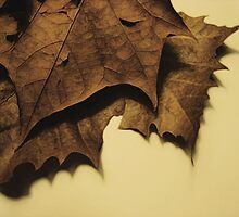 Leathery Leaves by triplelll