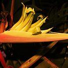 unusual flower by xXDarkAngelXx