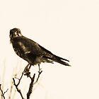 when little birds go bad.... by Lisa  Kenny