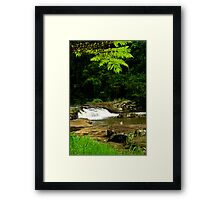The view through the ferns Framed Print