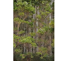 Tall trees Photographic Print