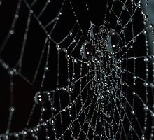 Wet spiders web by franceslewis