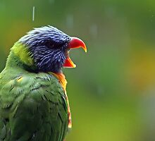 I'm Singing in the Rain by Lesley Smitheringale