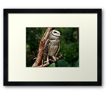 Freedom in Sight Framed Print