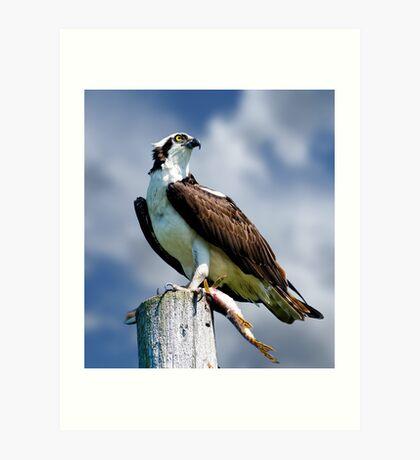 Osprey with Pike Art Print