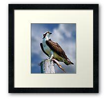 Osprey with Pike Framed Print