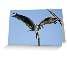 Osprey - Ottawa, Ontario Greeting Card