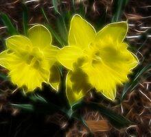 Lillies by Shane Shaw