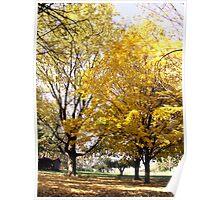 Autumn Yellow. Poster