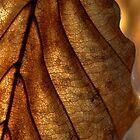 a dry leaf by xamad