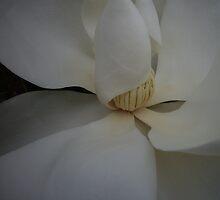 magnolia by shallay