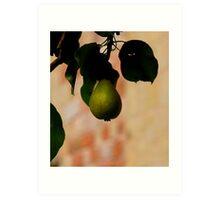 A Nice Pear Art Print