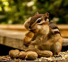 Chipmunk and Nut by Image11