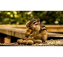 Chipmunk and Nut Photographic Print