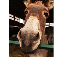 Donkey Sanctuary of Canada #2 Photographic Print