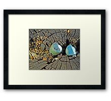 Blackbird egg Framed Print