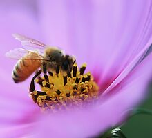 Nectar in Pink by cdwork