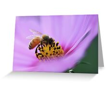 Nectar in Pink Greeting Card