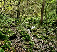 Woodland in Northern End of Monk's Dale by Rod Johnson