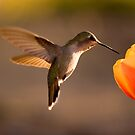 Sun Setting on a Hummer & Tulip by Daniel J. McCauley IV