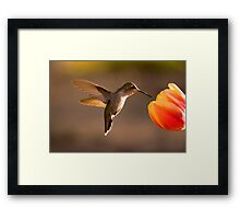 Sun Setting on a Hummer & Tulip Framed Print