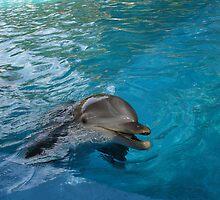 Dolphin by Cathy Jones