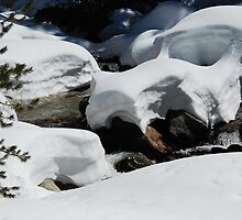 Spring snowpack, Sequoia by rononbjr