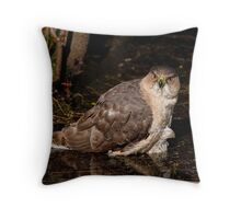 Coopers Hawk- Ottawa, Ontario Throw Pillow