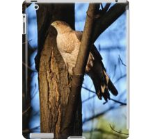 Coopers Hawk - Ottawa, Ontario iPad Case/Skin