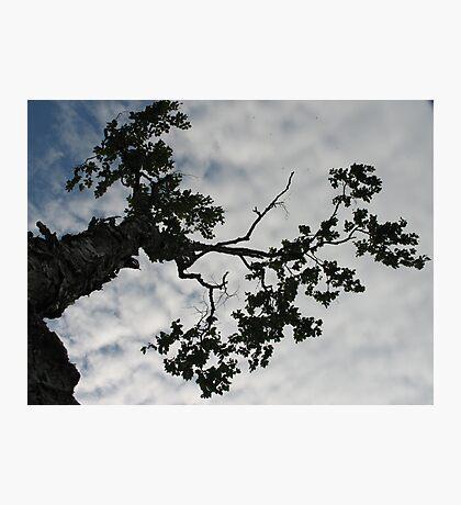 Tree Sky Photographic Print