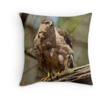 Coopers Hawk - Ottawa, Ontario Throw Pillow