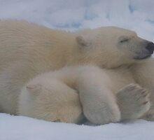 Cub Hug by Steve Bulford