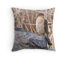 Coopers Hawk - Ottawa, Onterio Throw Pillow
