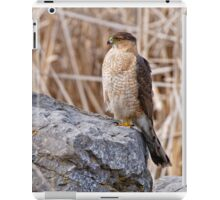 Coopers Hawk - Ottawa, Onterio iPad Case/Skin