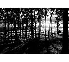 Sun floating through trees Photographic Print