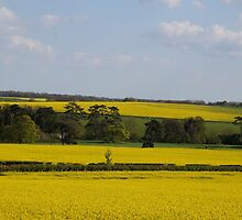 English Countryside by MrSheps
