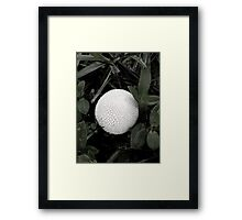 Puffball Framed Print