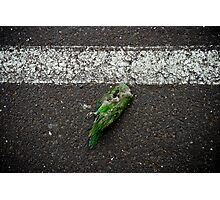 "Bird (from the ""We win"" series) Photographic Print"
