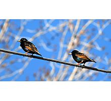 Starlings on a Wire Photographic Print