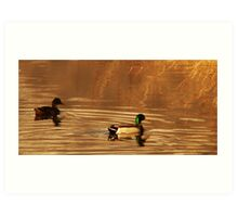 Mallard Drake & Hen - Golden Hour Art Print