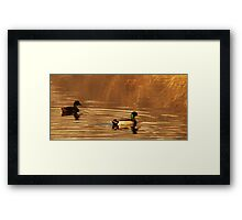 Mallard Drake & Hen - Golden Hour Framed Print