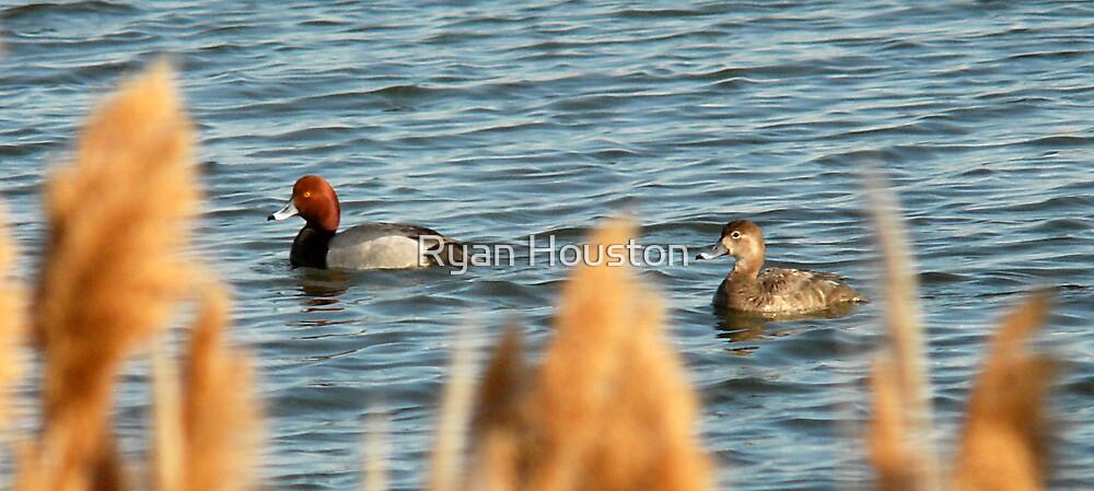 Redhead Drake & Hen - Utah Waterfowl by Ryan Houston