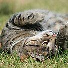 Puss by John Hansen
