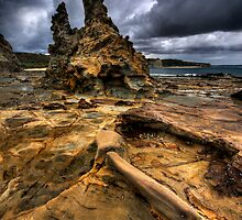 Storming Albatross Nest by Robert Mullner